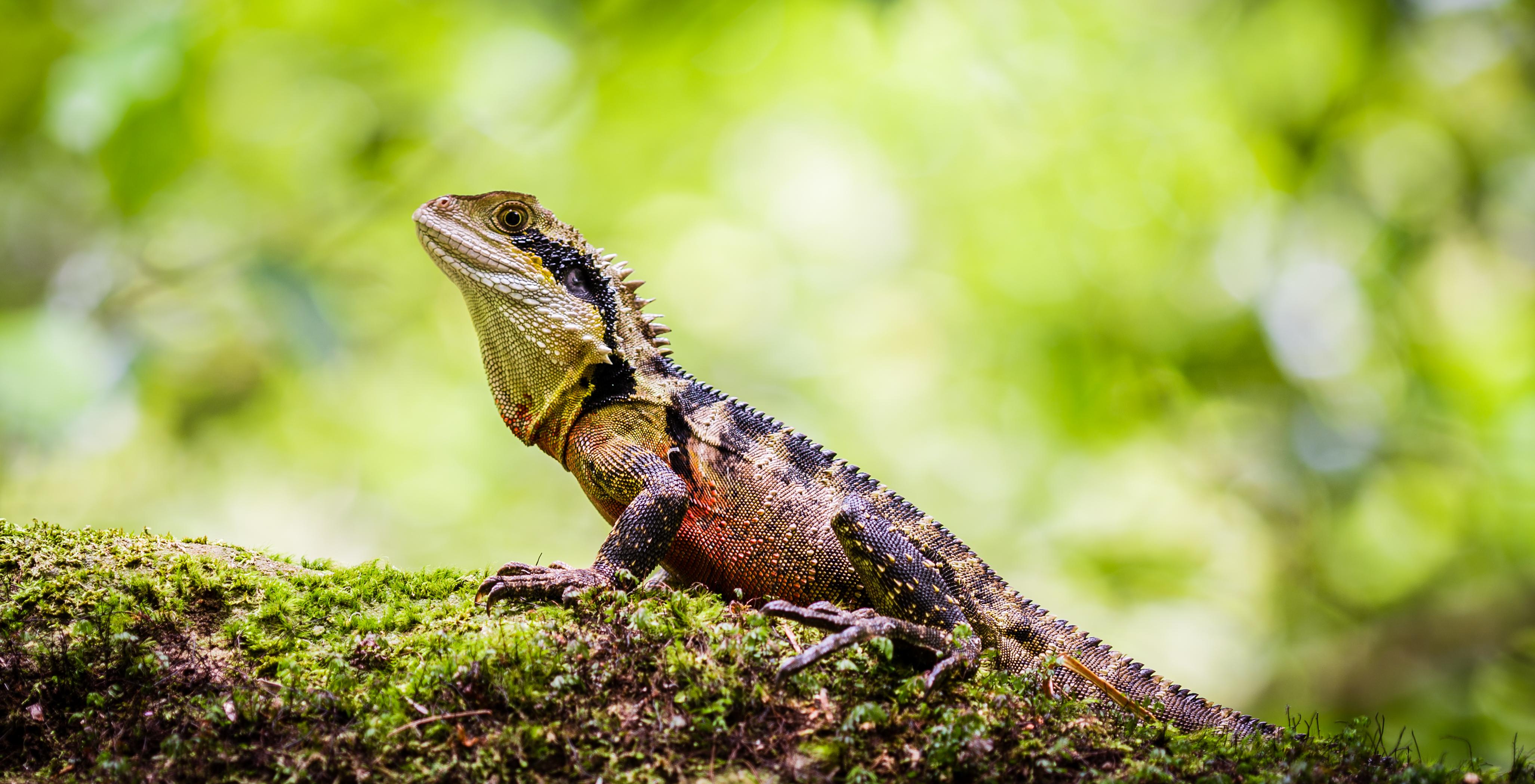 My Reptile Wish List Reptifiles