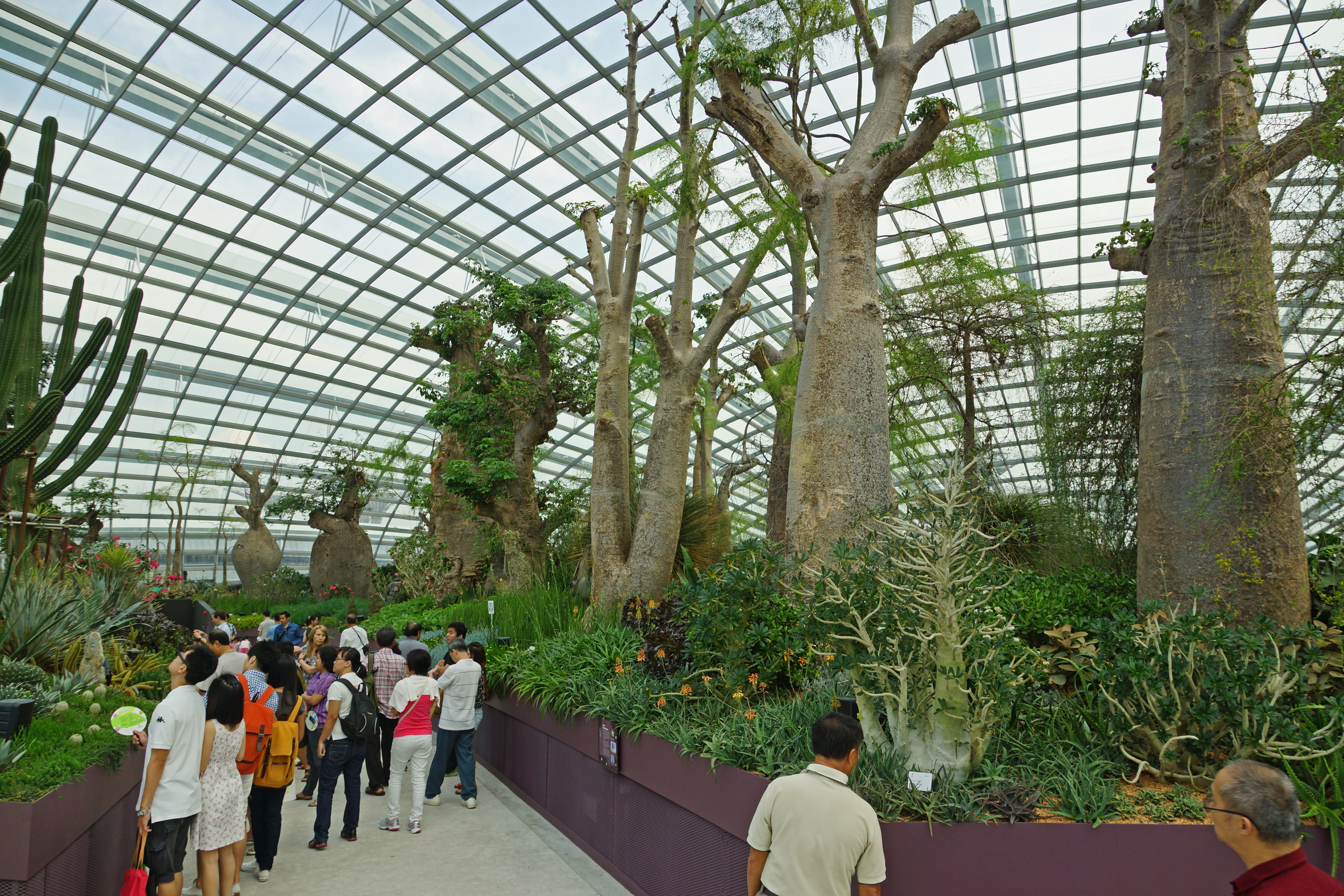 Description baobab and bottle tree garden, flower dome, gardens by the