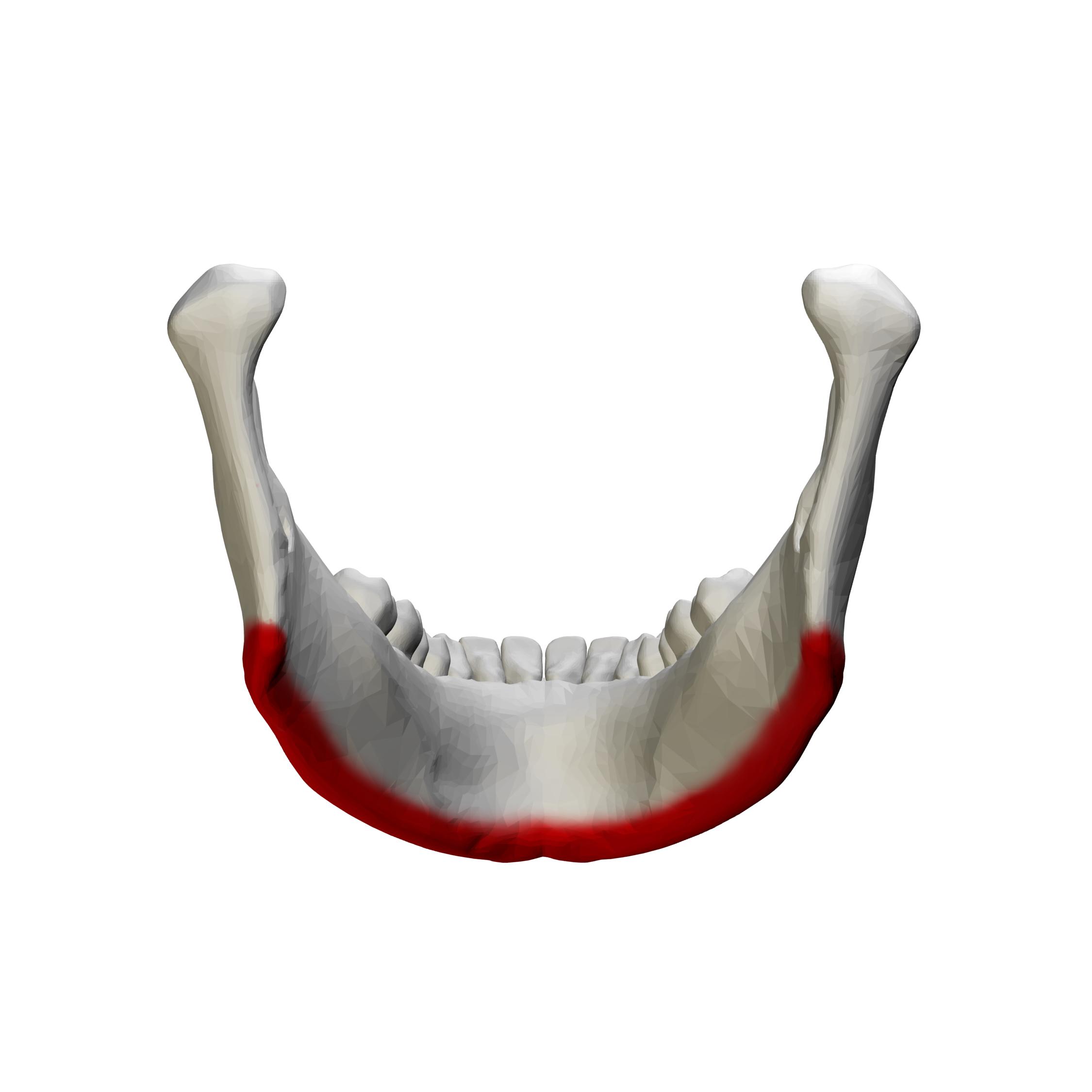 filebase of mandible close up posterior view01png