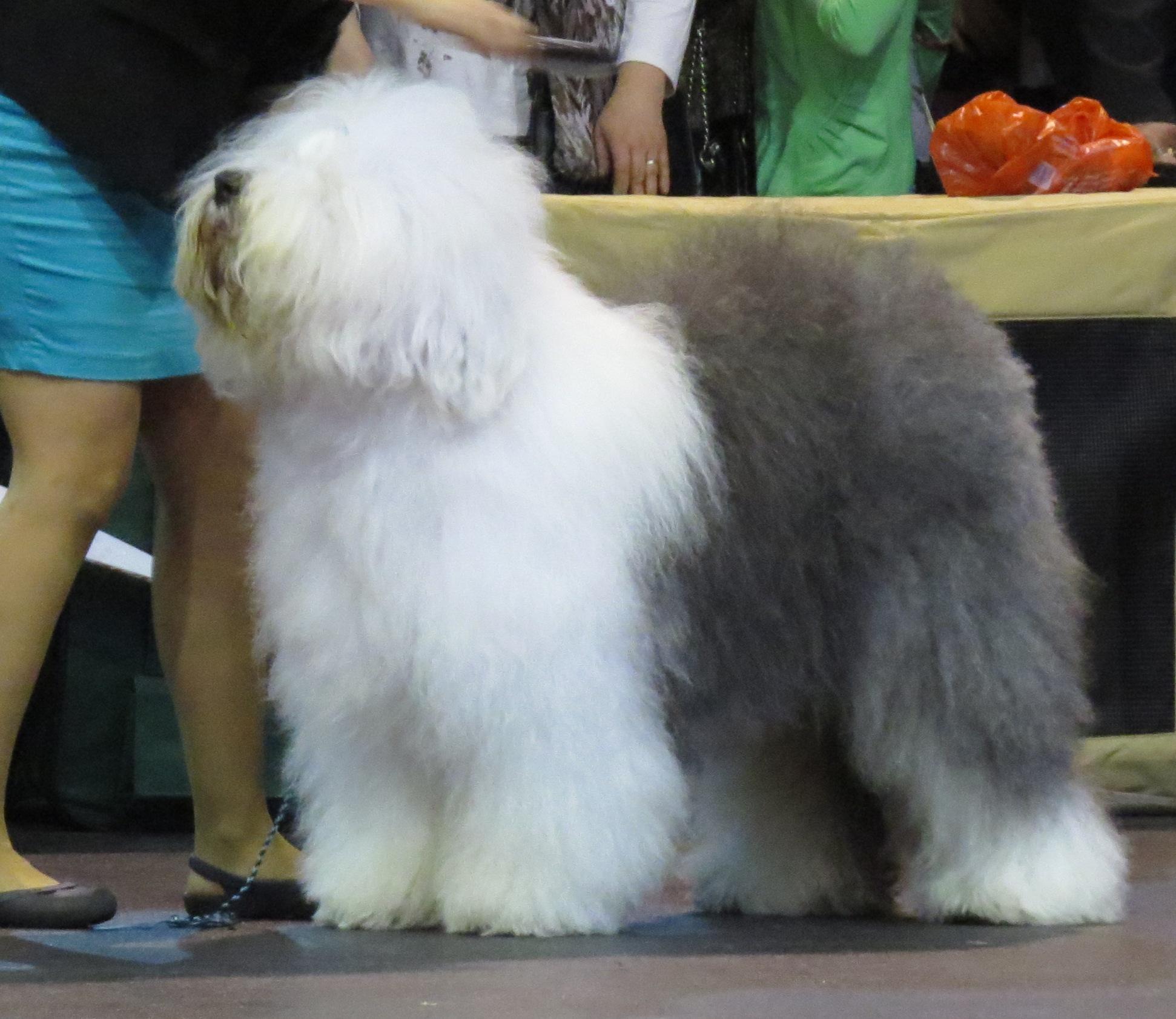 Weird Dog Breed Mixes