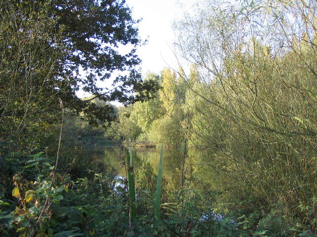 Central Marsh Pool, Brandon Marsh - geograph.org.uk - 592471