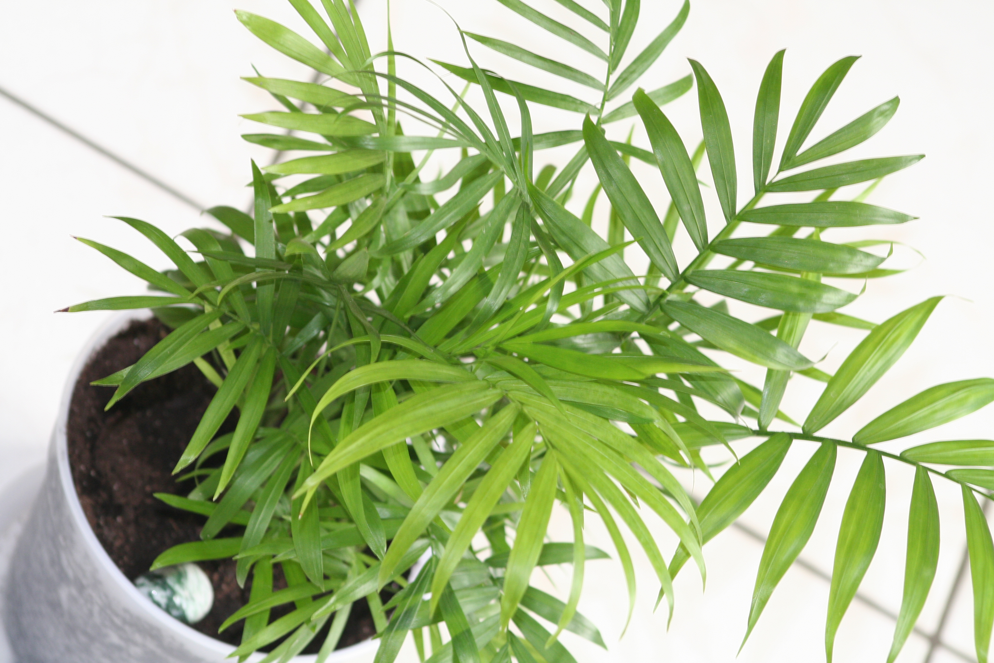 fern house plant identification pictures - House Plant Identification By Leaf