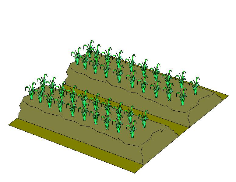 File:Dry Lands Paddy Field Illustration - 47.5KB