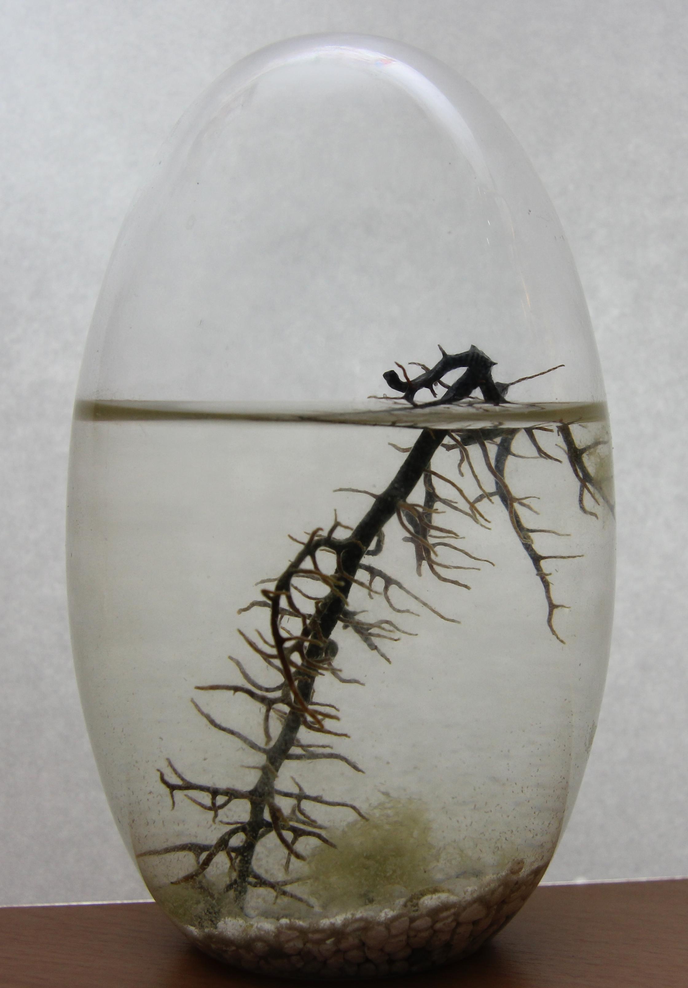 evivo Autarkes Ökosystem Geschlossene Biosphäre mit Garnelen