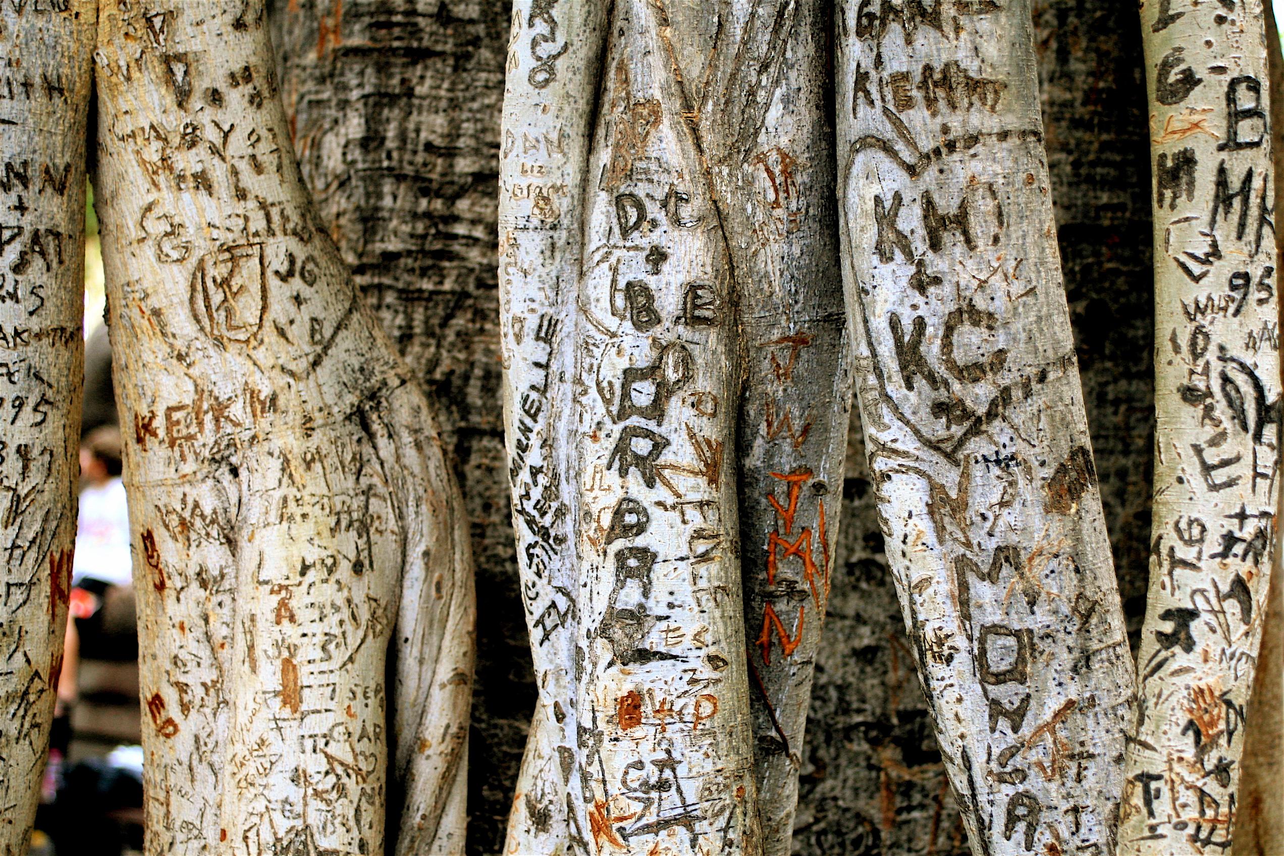 Filegraffiti banyan tree park jpg