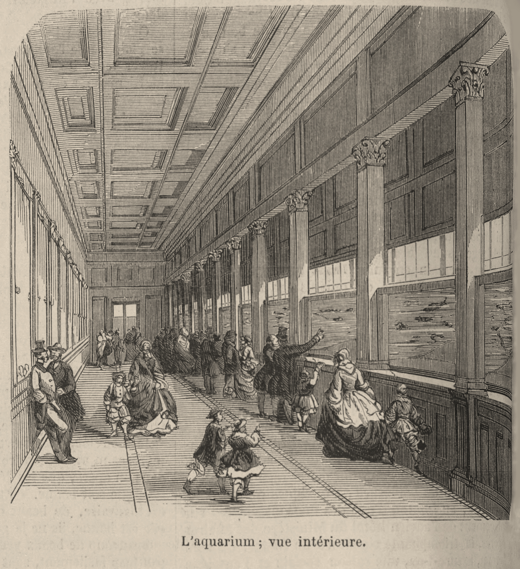 Fish aquarium wiki - The Jardin Zoologique At The Bois De Boulogne Included An Aquarium That Housed Both Fresh And Saltwater Animals 1860 In Paris