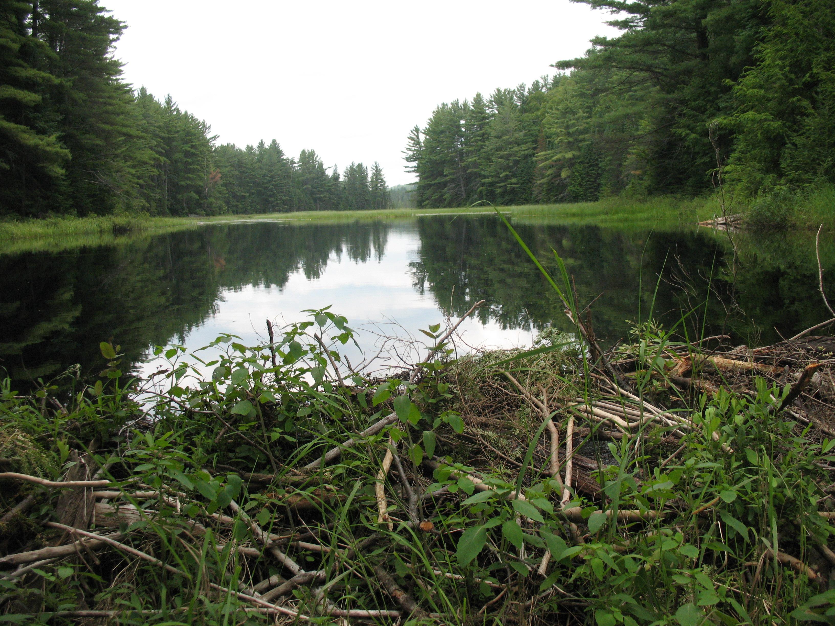 Mizzy Lake Algonquin Provincial Park.JPG
