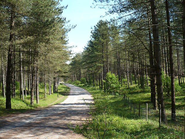 Path through Newborough Forest - geograph.org.uk - 848814