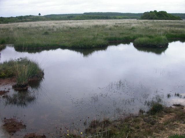 Pond at Hartland Moor - geograph.org.uk - 31326