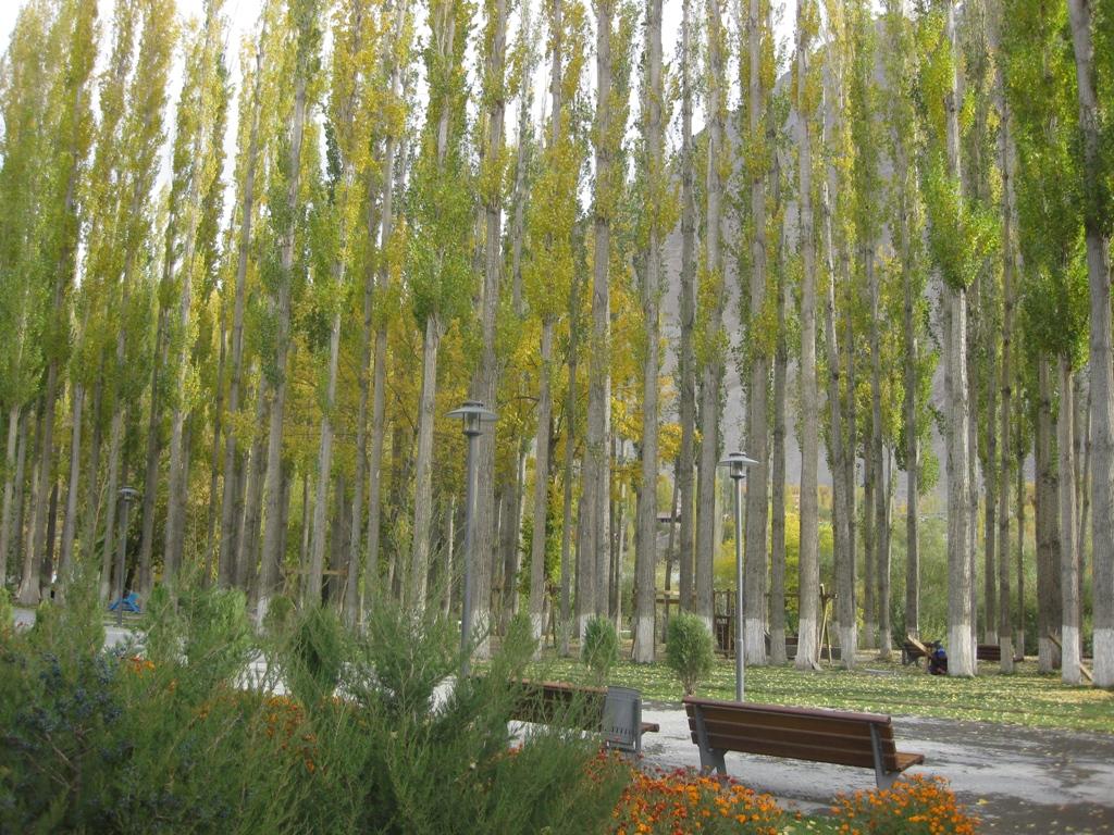 Is Poplar Good For Log Home Building