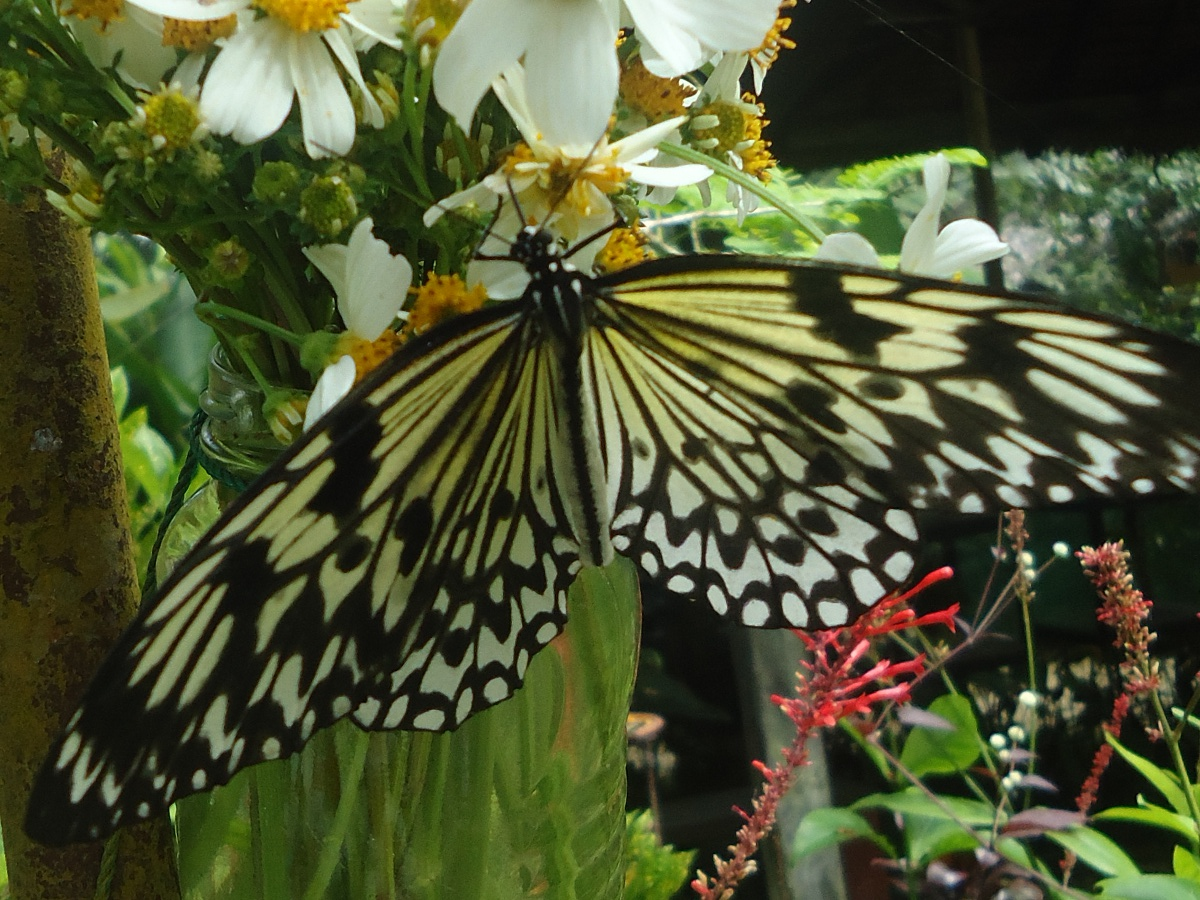 Butterflies in the Philippines
