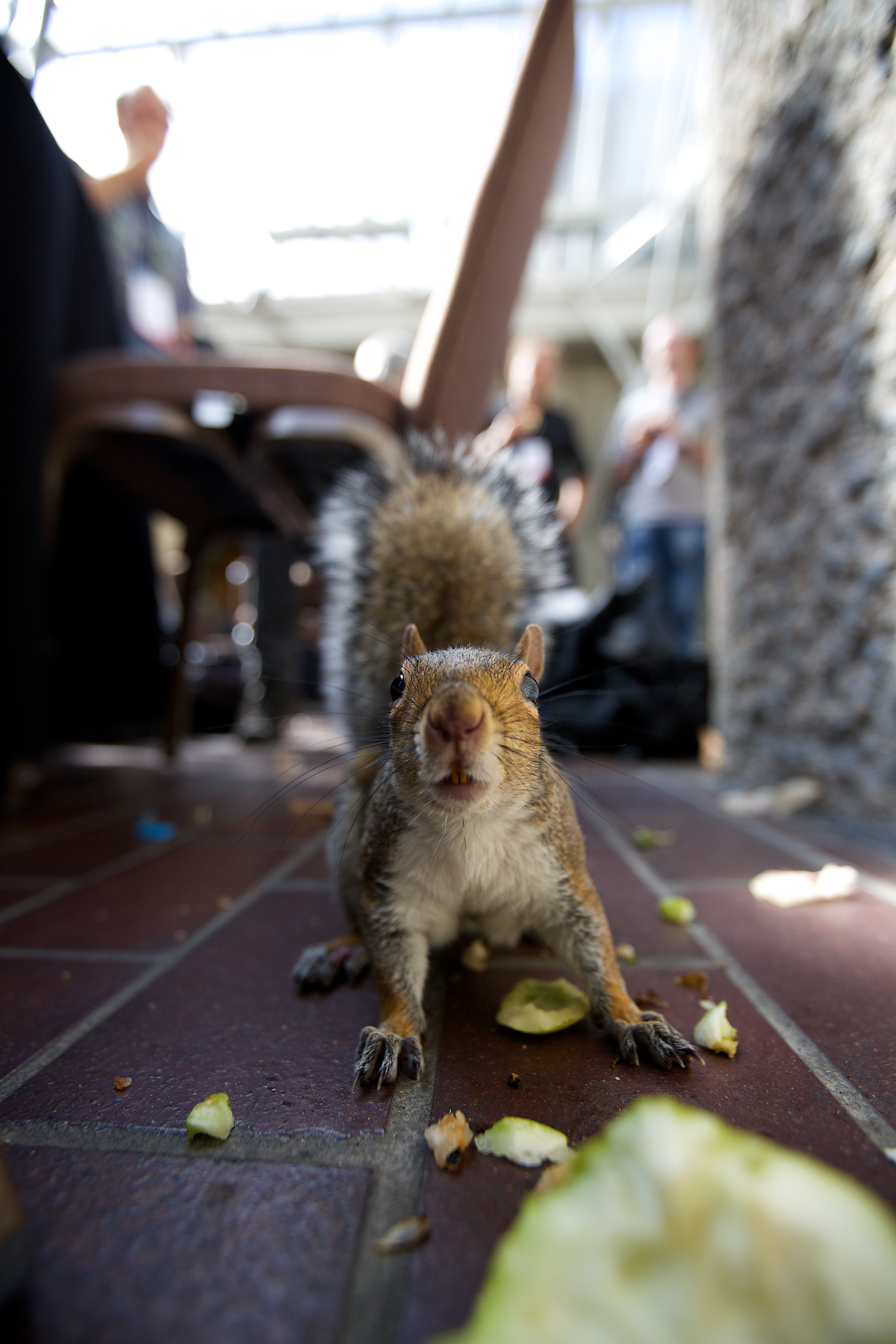 File Tame Squirrel At The Barbican During Wikimania 2014 14876106101 Jpg Wikimedia Commons