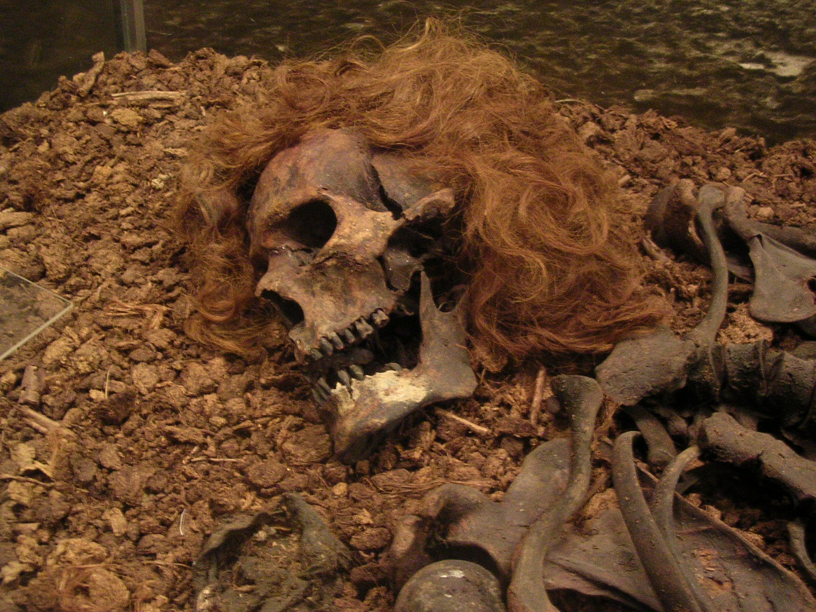 the bog bodies and what they Bog bodies, or bog people, are the naturally preserved corpses of humans and some animals recovered from peat bogs the bodies have been most commonly found in the northern european countries of denmark, germany, the netherlands, the united kingdom and ireland reports of bog bodies surfaced during the early 1700s.