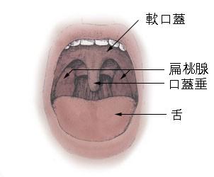 File:Tonsils diagram日本語版.jpg