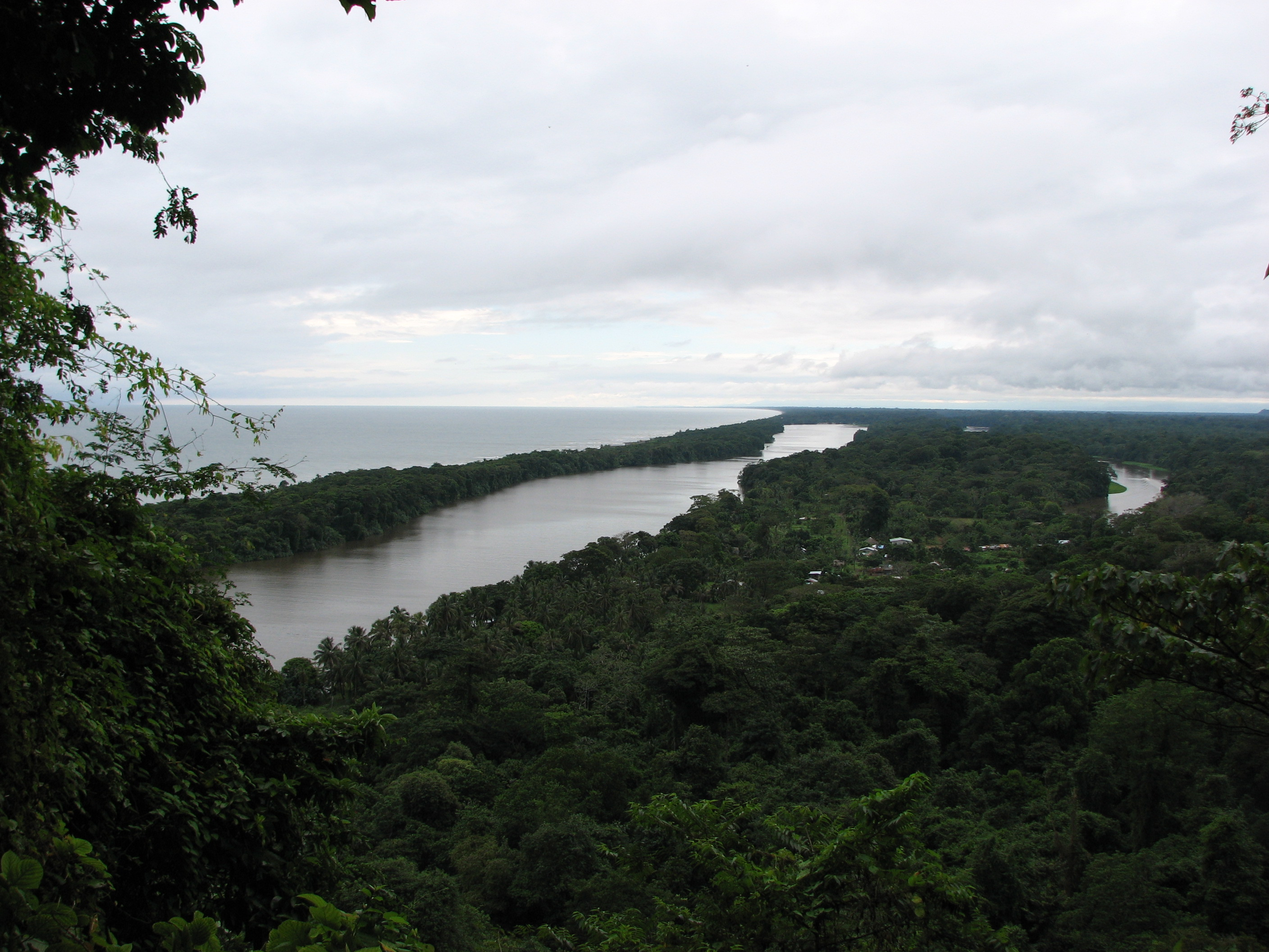 Tortuguero National Park Wildlife