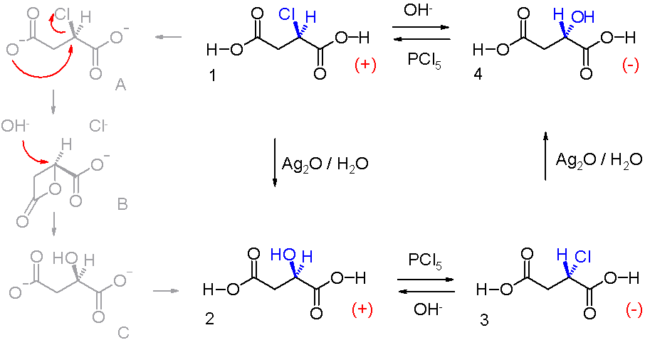 stereochemistry of butenedioic acid Stereochemistry of cyclic compounds communication 64 stereochemistry of the oxidation and bromination of 4,5-dimethyl-4-cyclohexene-cis-1,2-dicarboxylic acid.