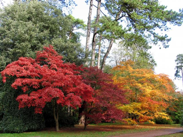 Westonbirt Arboretum - geograph.org.uk - 2546
