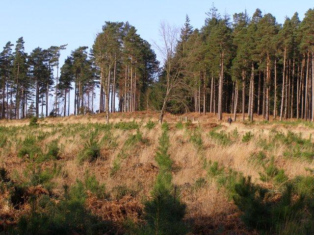 Greenwashing - Co z tego, że firma deklaruje, iż np. posadziła 10000 drzew, podczas gdy jej działania poskutkowały wycinką 1000000 drzew (lub 10000 starych drzew)?