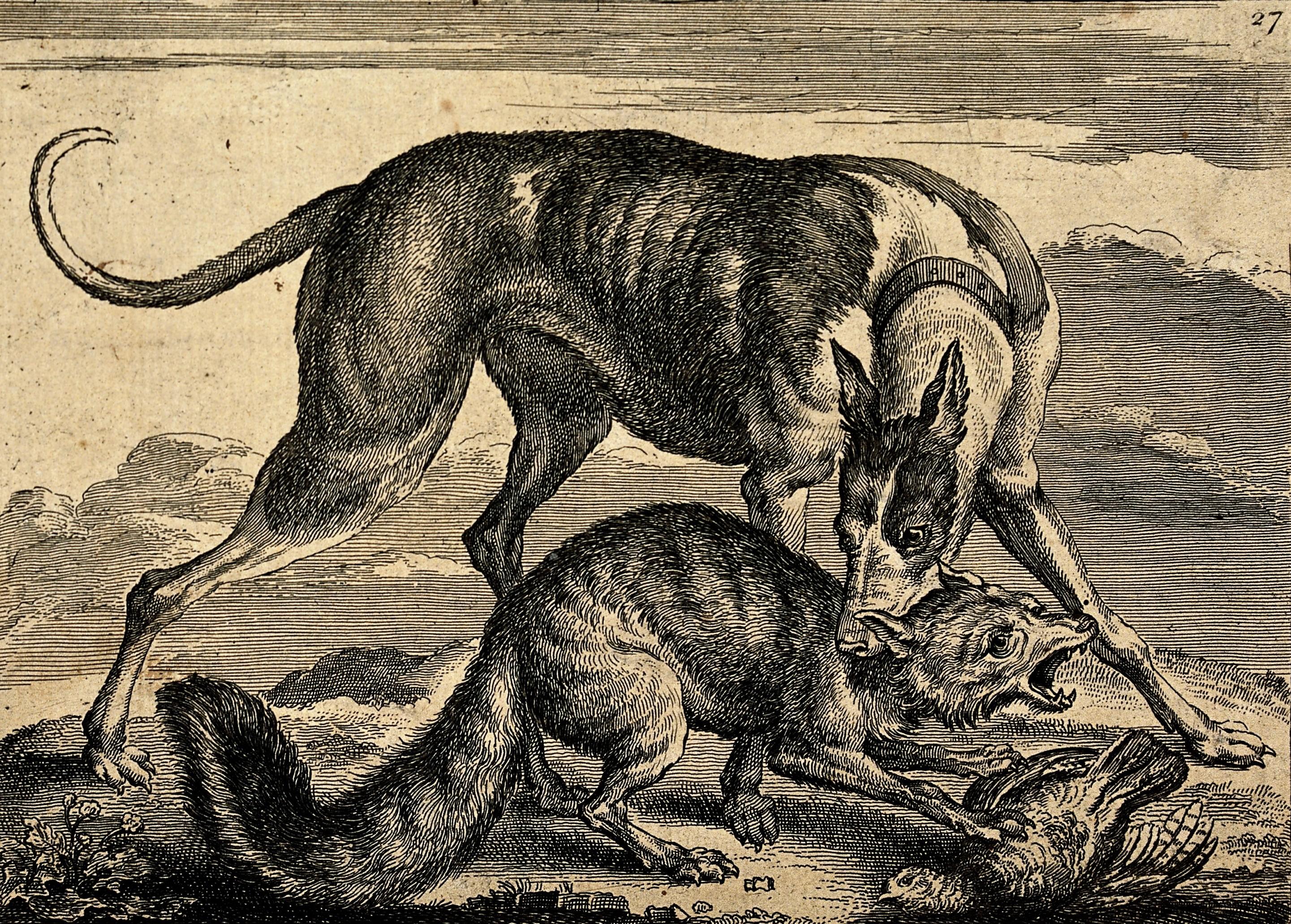 Fox And Dog Best Friend