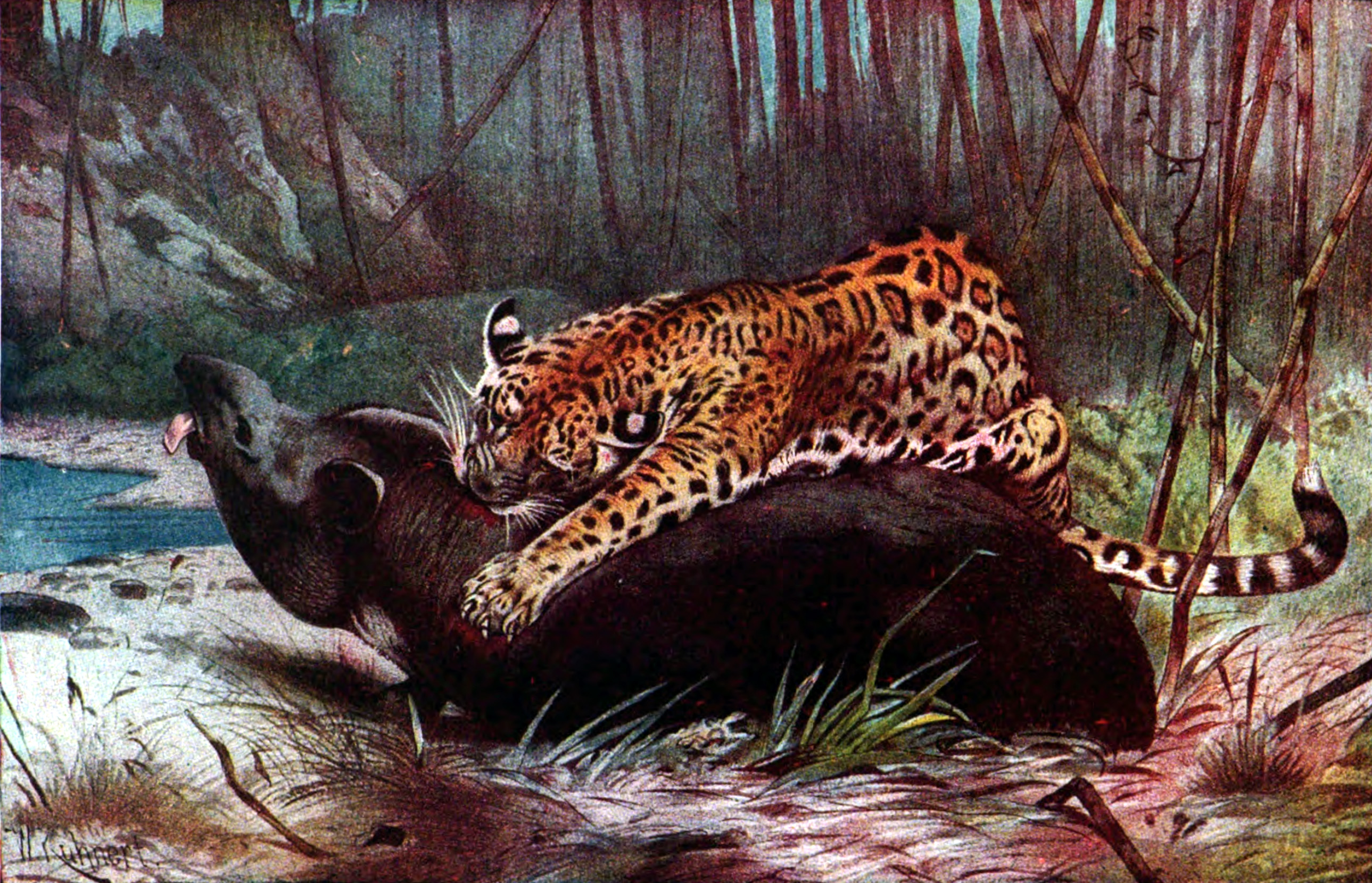 File:Americana 1920 Jaguar   South American Jaguar And Tapir