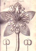 Anatomy of Plants cover