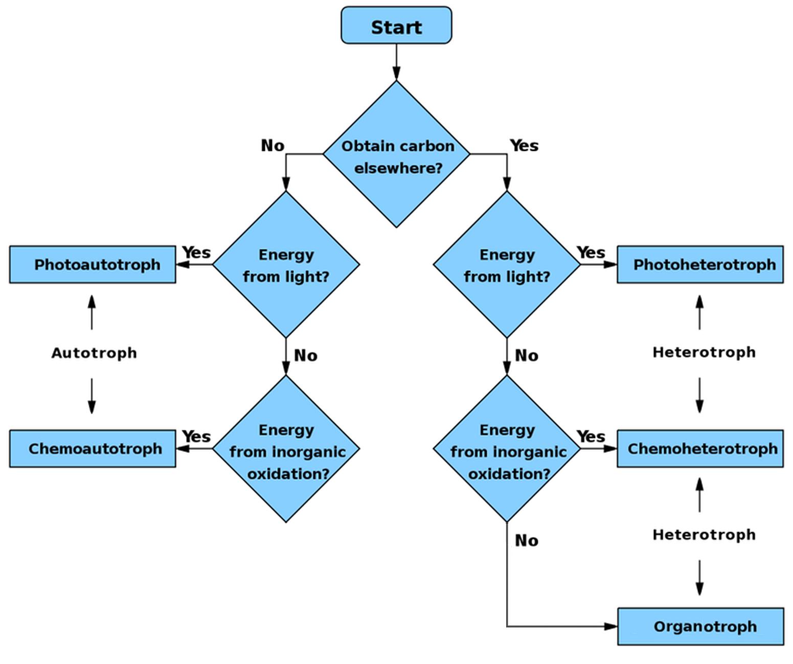 File Autoheterotrophs Flowchart Png Wikimedia Commons
