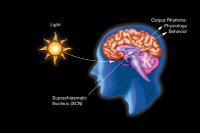 A variation of an eskinogram illustrating the influence of light and darkness on circadian rhythms and related physiology and behavior through the suprachiasmatic nucleus in humans