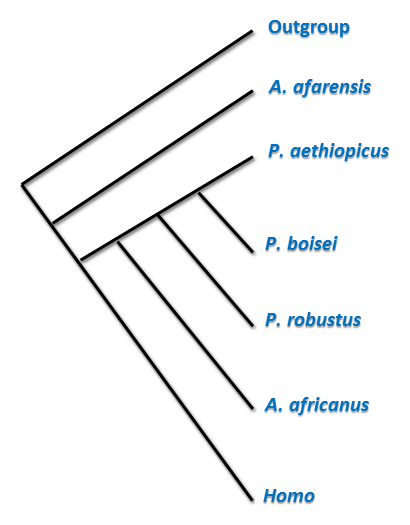 [Image: Cladistic_analysis_of_early_hominins.png]