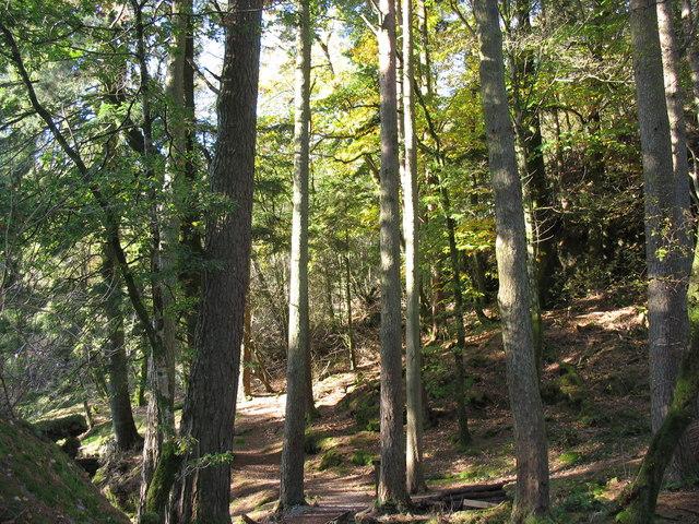 Craflwyn Woods - geograph.org.uk - 276855