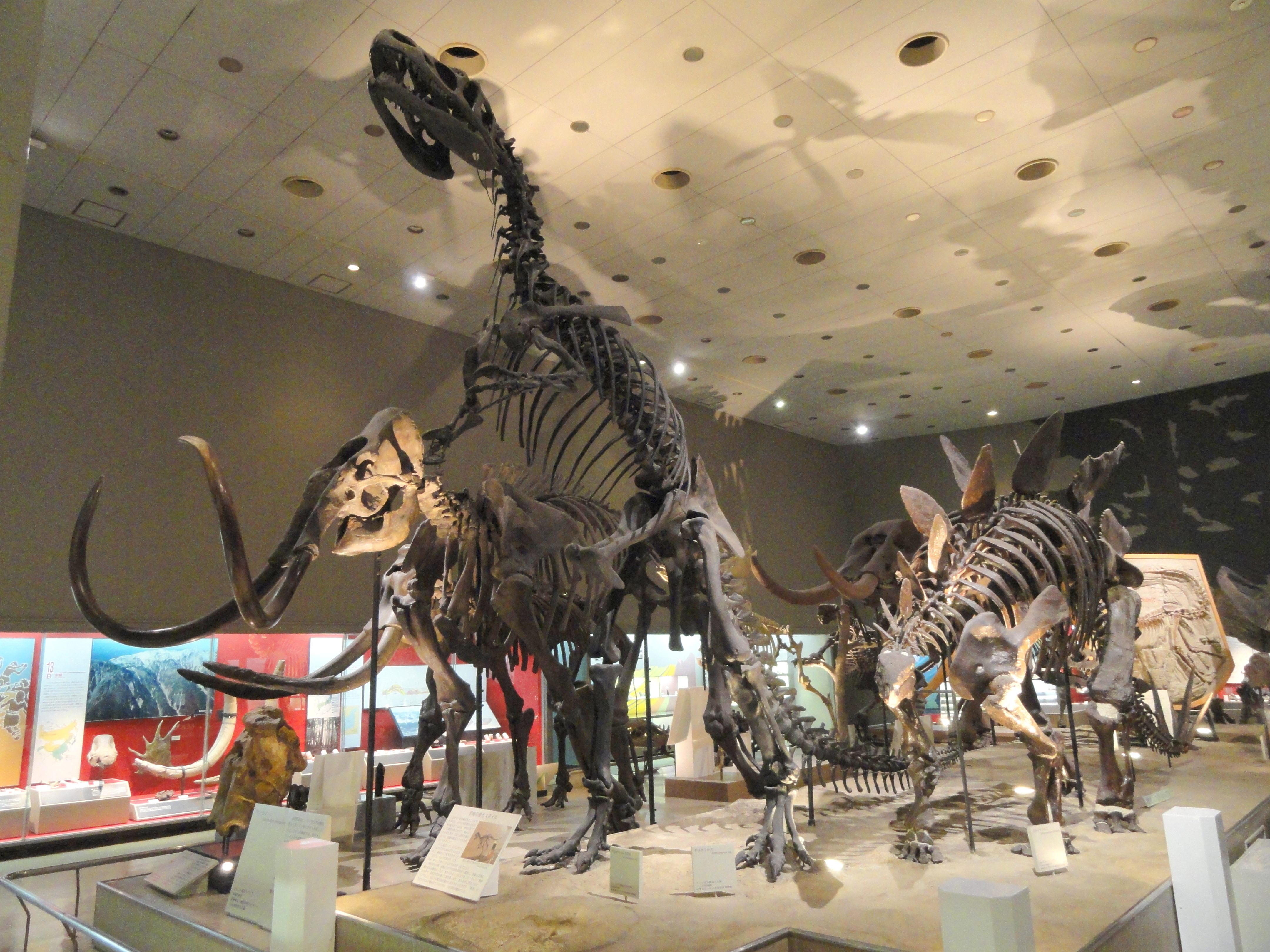 Design Dinosaur Room filedinosaur room osaka museum of natural history dsc07802 jpg