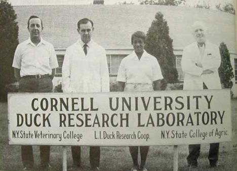 Cornell Duck Research Lab Long Island Ny