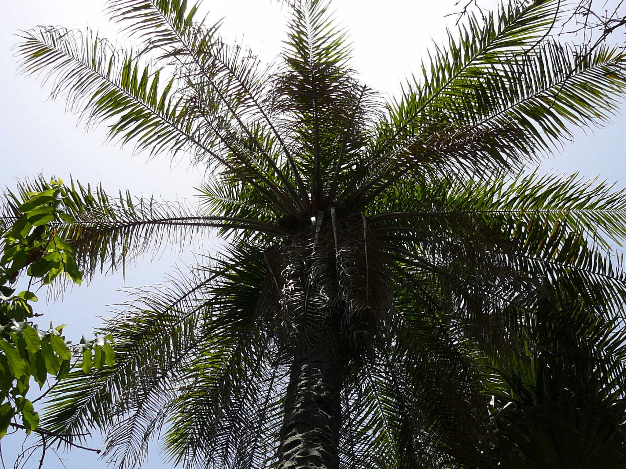 hybrid oil palm Malaysia's journal of oil palm research website  alkhatib, mfr, majozi, t technical feasibility study of a low-cost hybrid pac-uf system for wastewater.