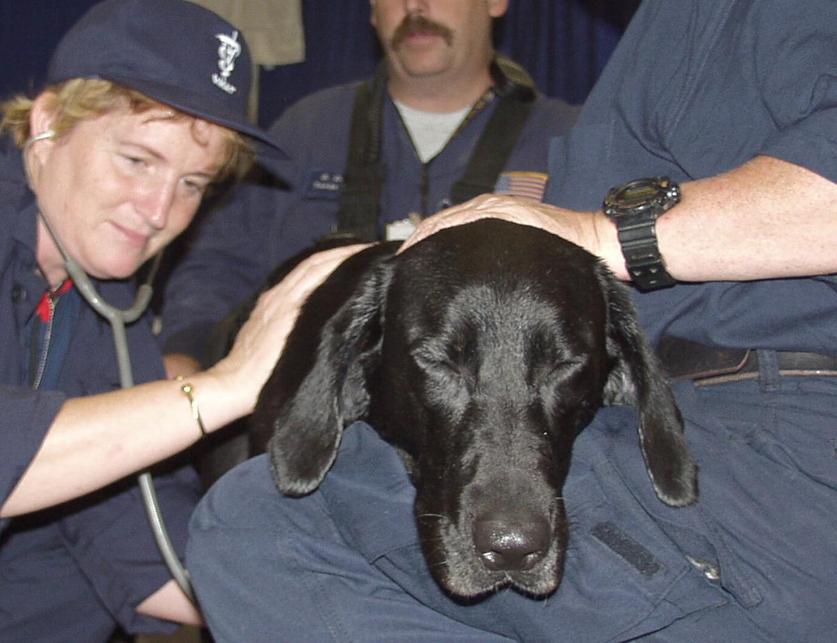 Image Result For Urban Dog Training