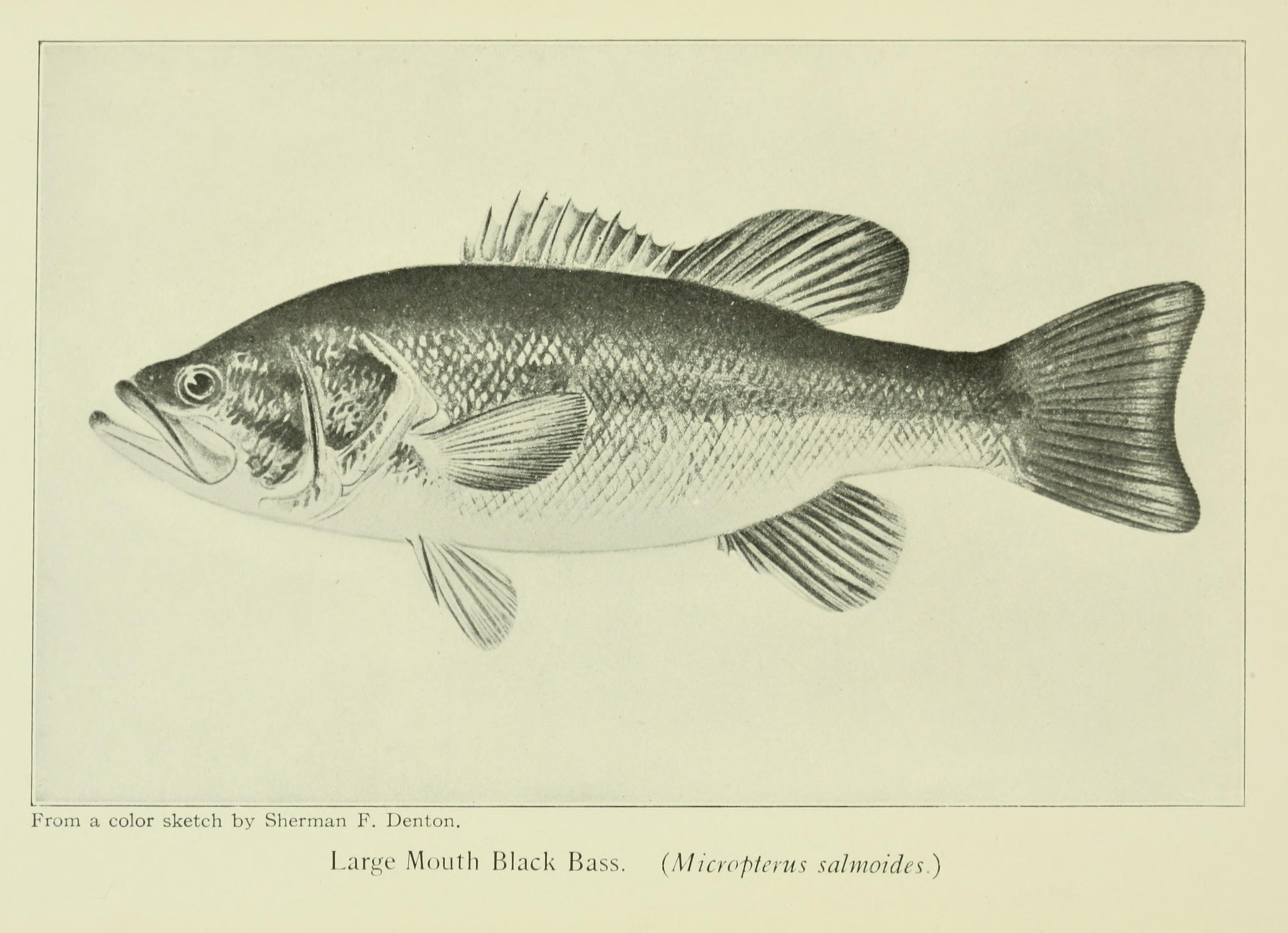 File:Favorite Fish and Fishing 03.jpg - Wikimedia Commons