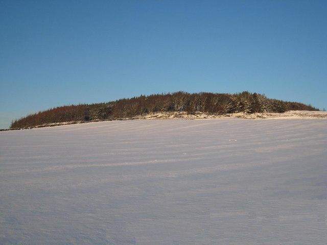 Field of snow near Highcliff Wood - geograph.org.uk - 1632184