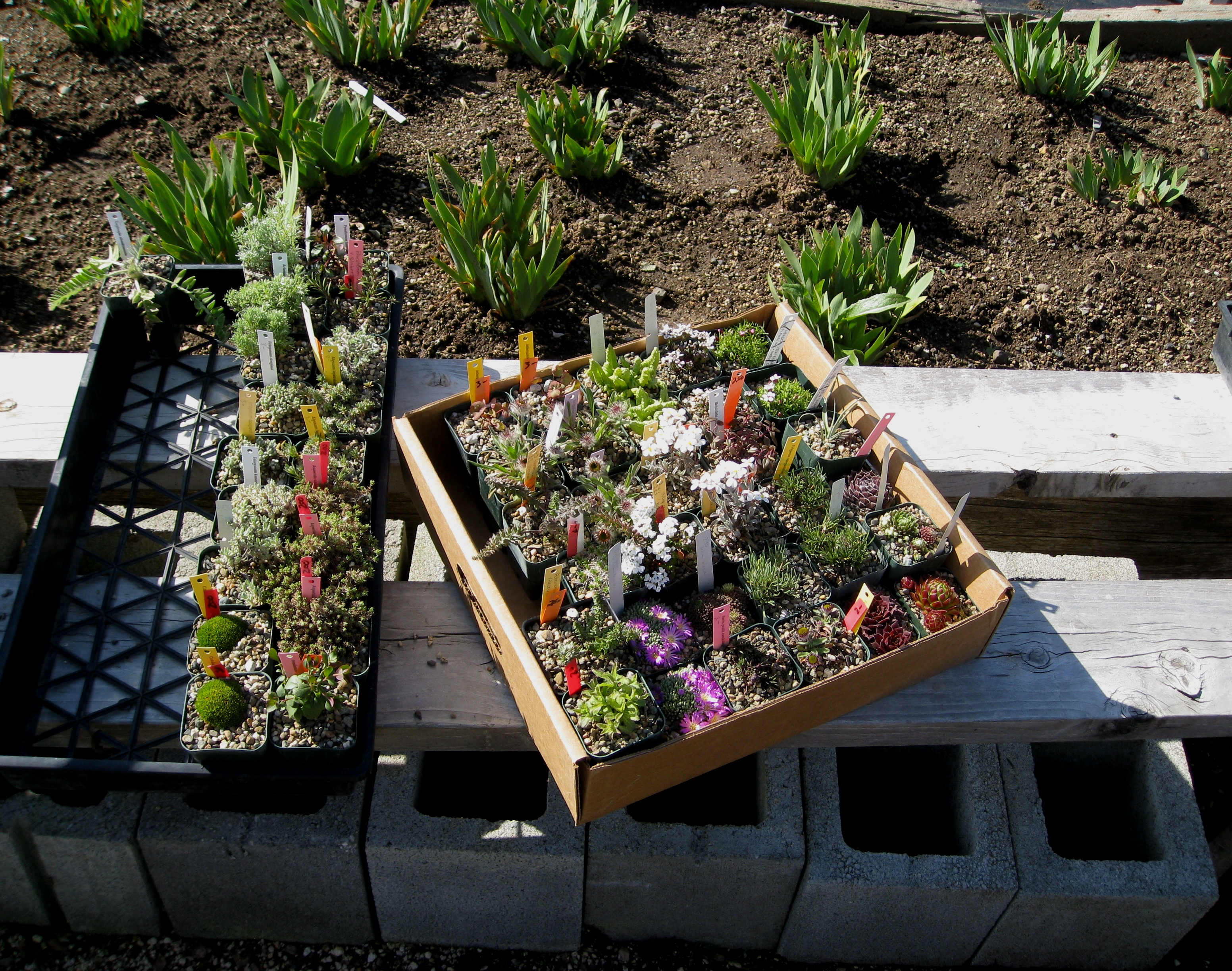 Quality inn suites 1000 islands blog 2015 blog posts plant sale may 9 sciox Images