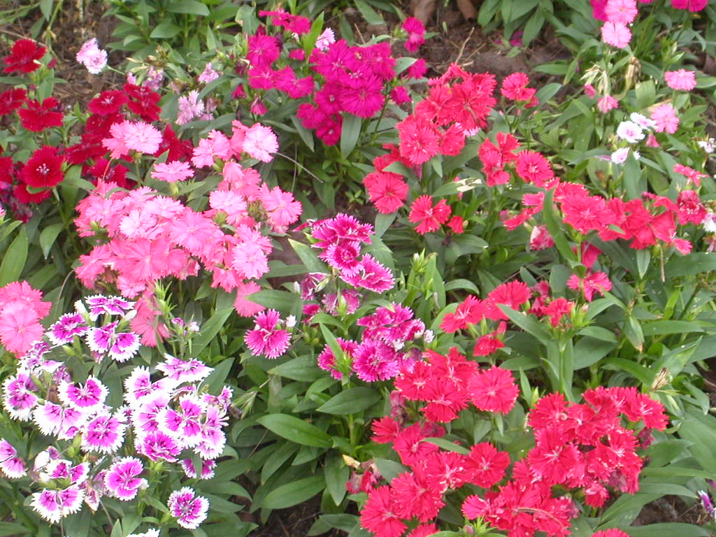 file flower garden unknown plant wikipedia