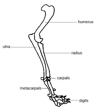 Anatomy and Physiology of Animals/The Skeleton - Wikibooks, open ...