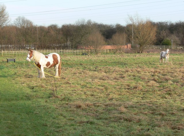 Horses on the Aylestone Meadows - geograph.org.uk - 651286