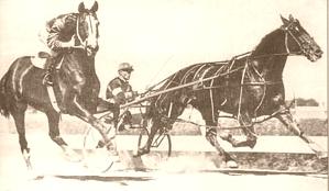 Indianapolis (horse) New Zealand Standardbred racehorse