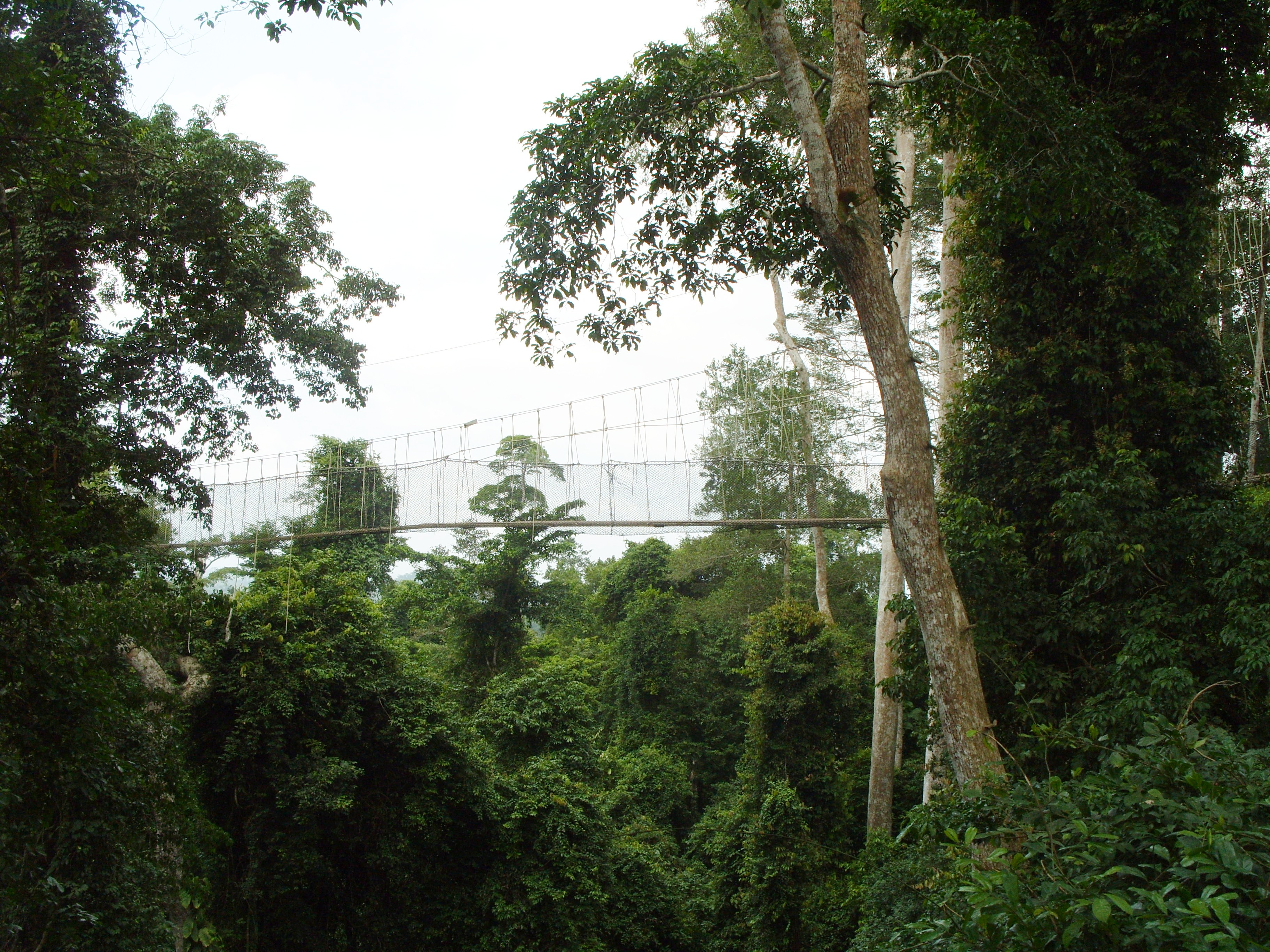 an overview of the tropical rain forests and its evolution Producers of the tropical rainforest the tropical rainforest is a lush forest with extremely high amounts of rain tropical rainforest producers and consumers.