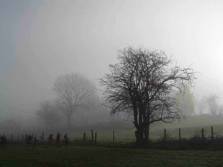 File Mist And Trees Jpg Wikimedia Commons