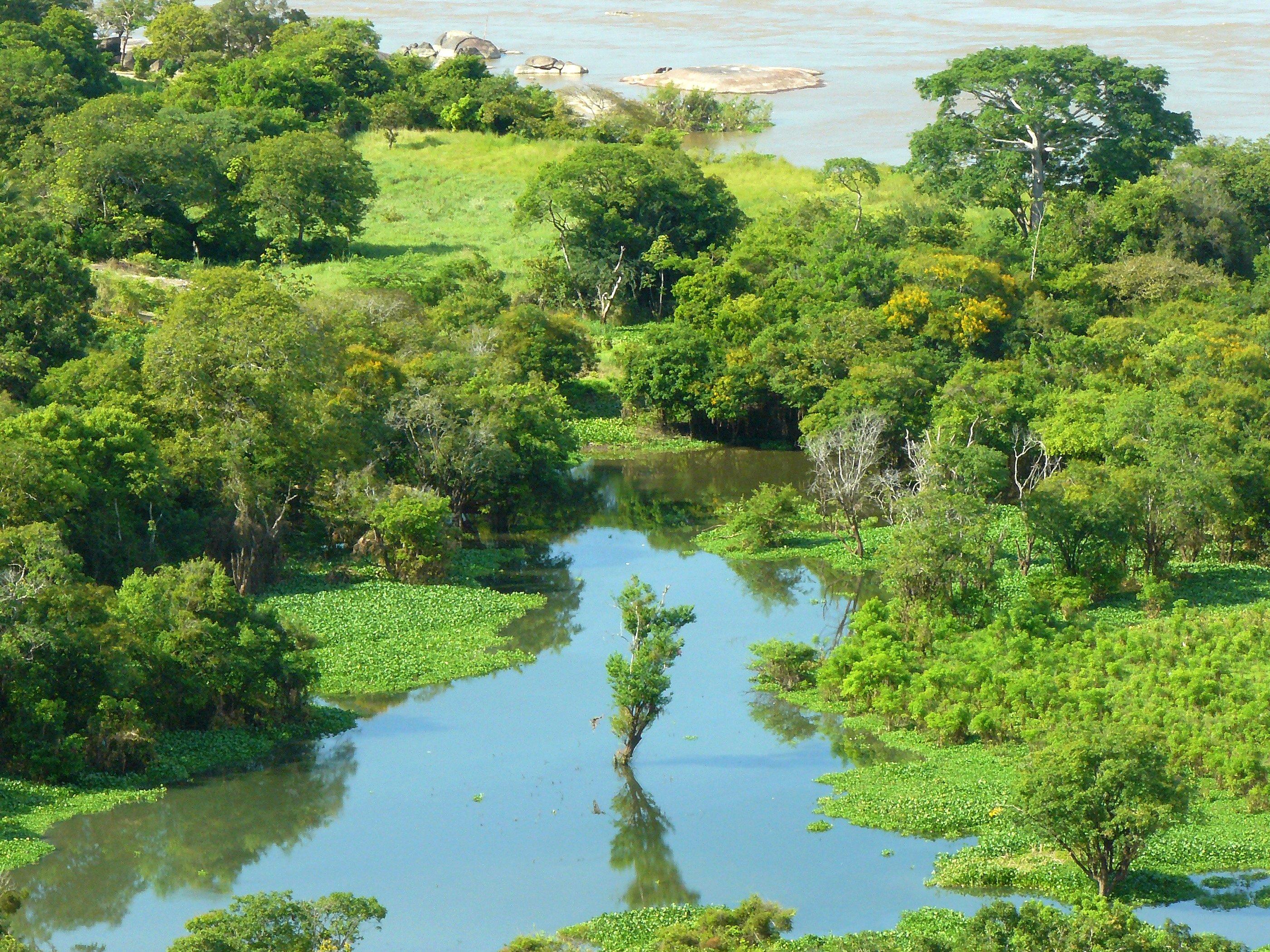 Orinoco River File:Orinoco4.j...