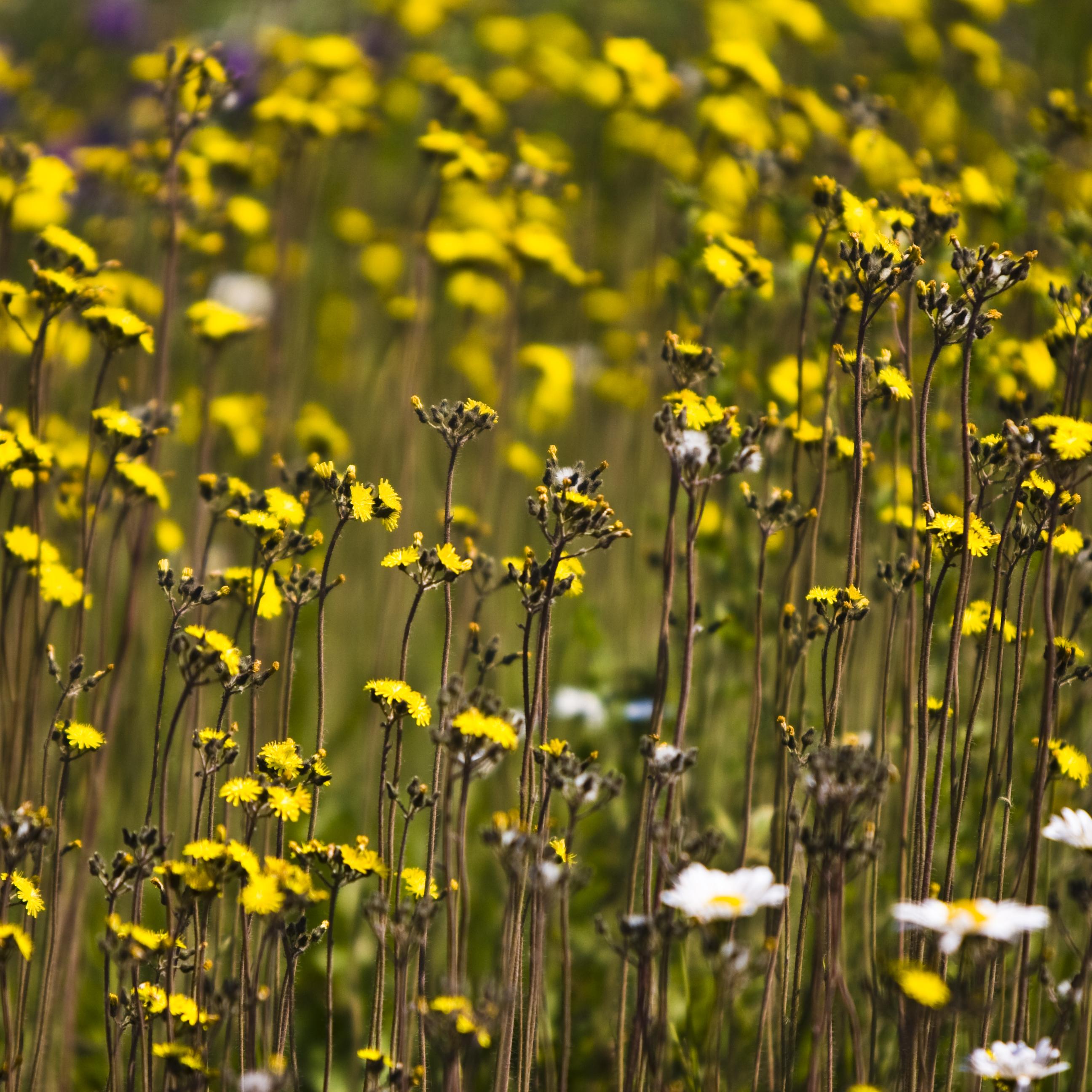 Filepass Lake Flowers 2680989230g Wikimedia Commons