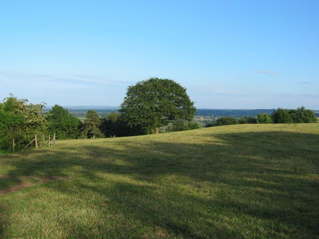 Pasture on Bickerton Hill - geograph.org.uk - 184892