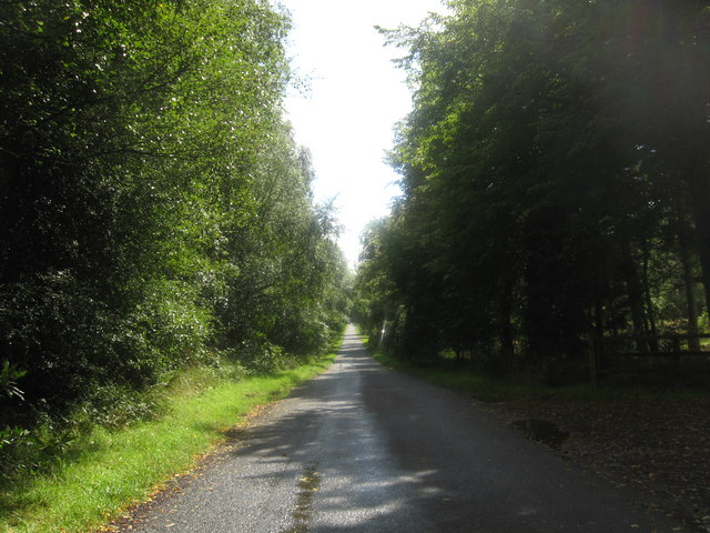 Road running between the Oak and Bining Woods - geograph.org.uk - 1443788