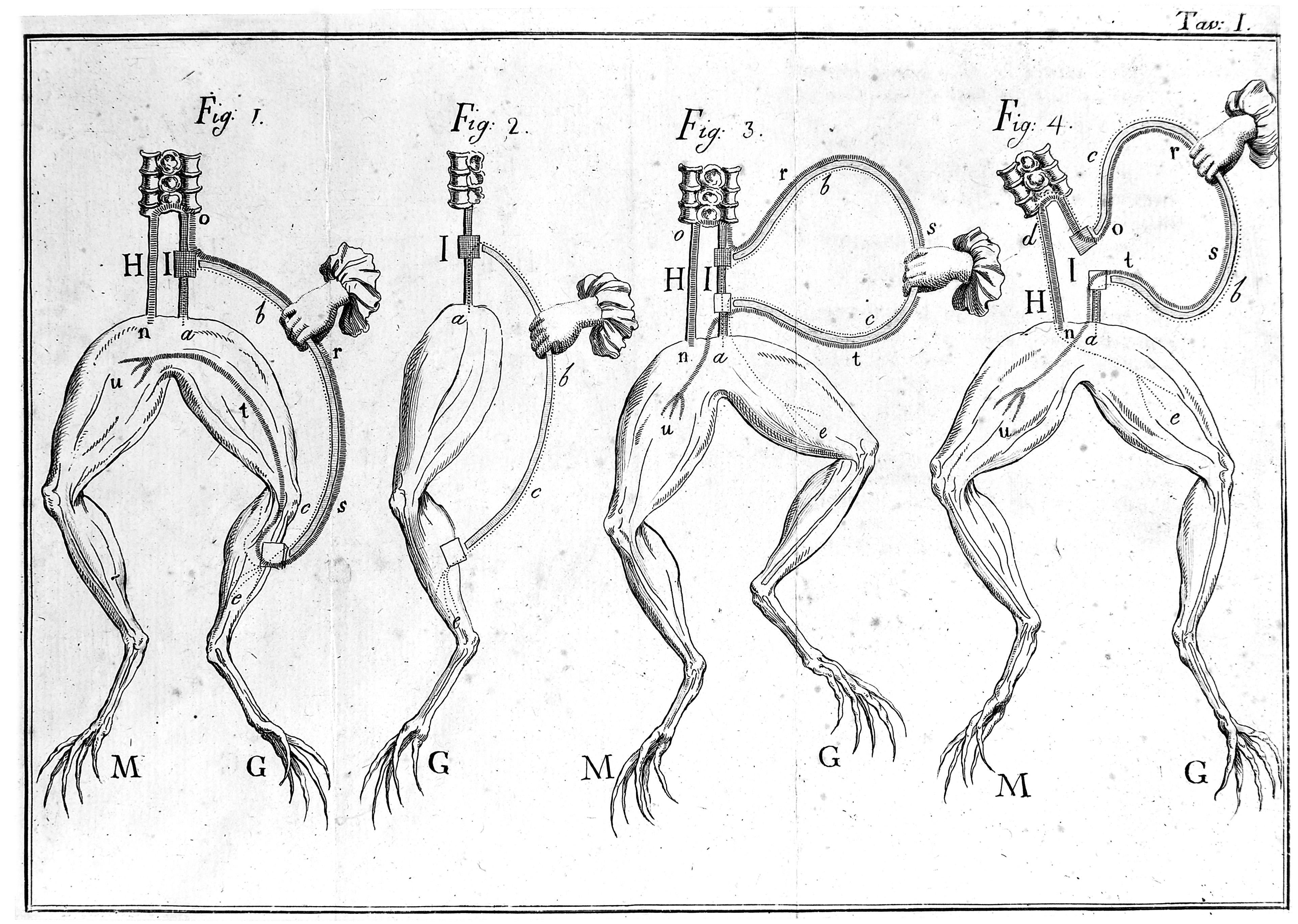 Frog Sciatic Nerve Average Conduction Velocity At Room Temperature