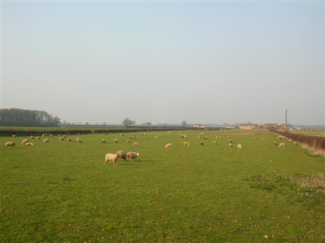 File:Sheep at Low House farm - geograph.org.uk - 381444.jpg
