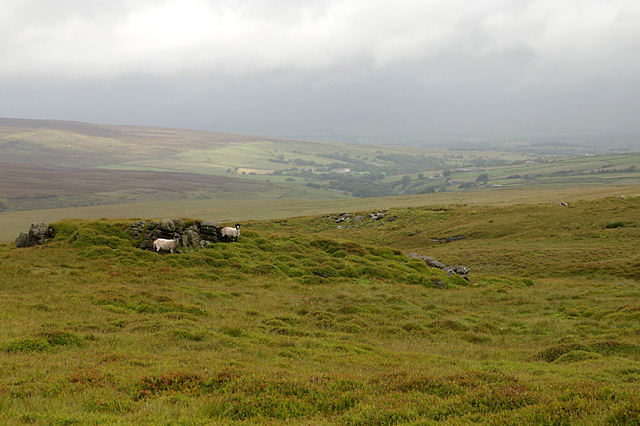 Sheep sheltering - geograph.org.uk - 879182