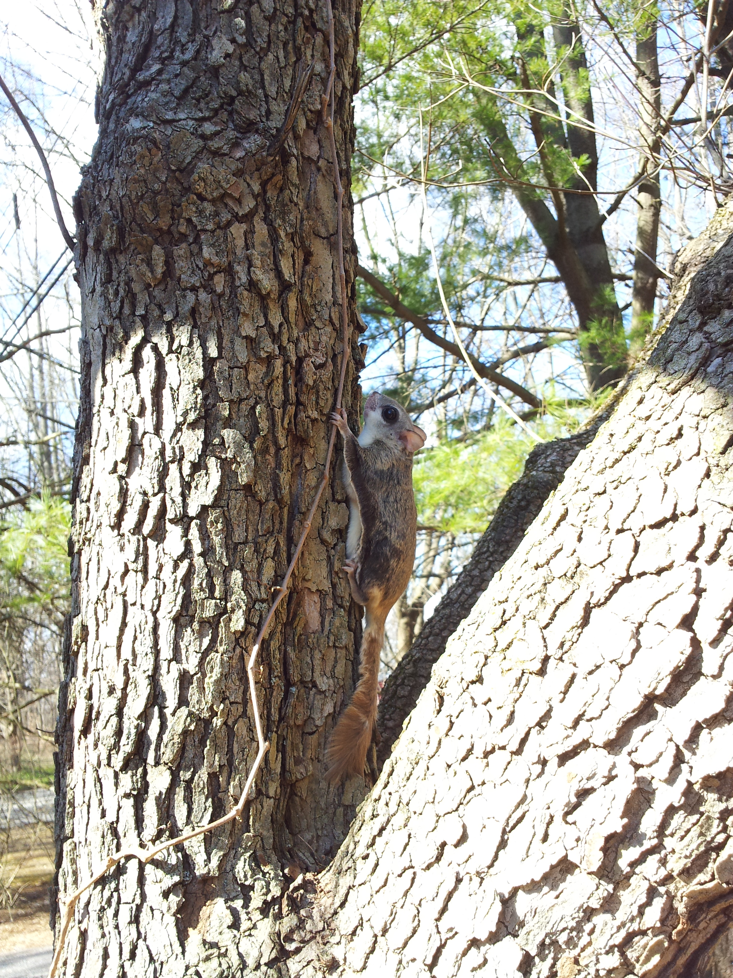 Image Result For Squirrel In Tree